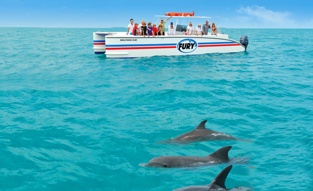 Dolphin Watch Tours Key West